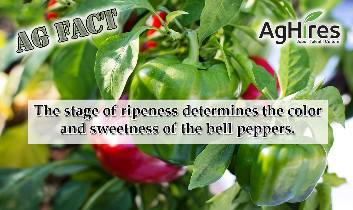 Pin by AgHires on Agriculture Facts Stuffed peppers