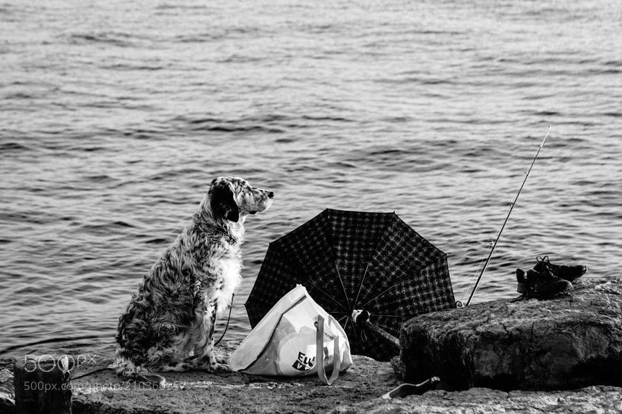 dog and umbrella - dog and umbrella