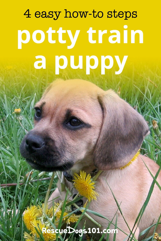 Dog Potty Training in 4 Easy Steps