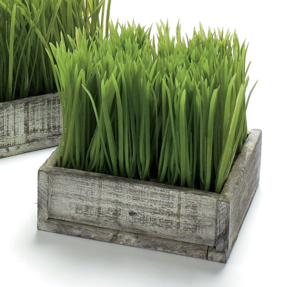 Distressed Planter With Potted Wheatgrass Great If You Love To