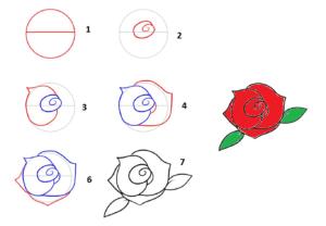 Gambar Bunga Langkah Demi Langkah Cara Menggambar Bunga Mawar Bagi Pemula Dalam 7 Langkah Mudah Indischool Cara Mengga Gambar Gambar Bunga Menggambar Bunga