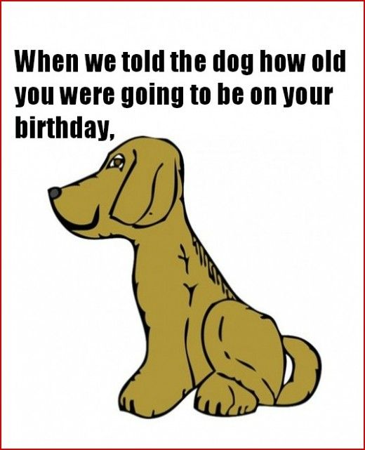 Happy Birthday Dad Dog Pictures Funny