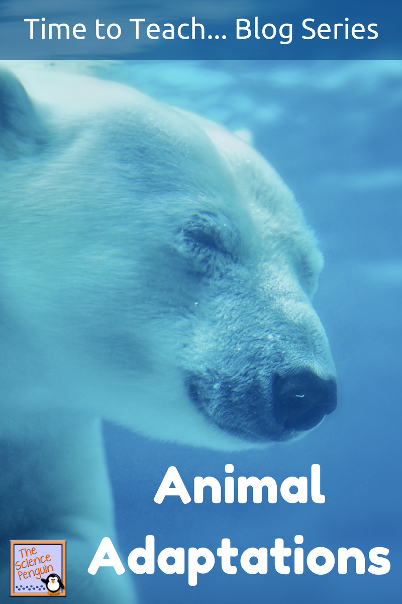7 Ideas to Teach Animal Adaptations | Science Teaching Resources ...