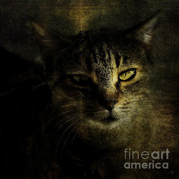 Title  Portrait Of A Tommycat   Artist  Alice Van der Sluis   Medium  Photograph - Photography, Photography Based Digital Art