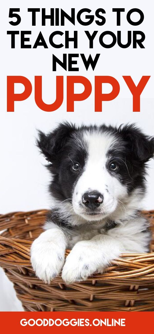 Skip Your Puppy Training Class Watch These Videos Good Dog Info