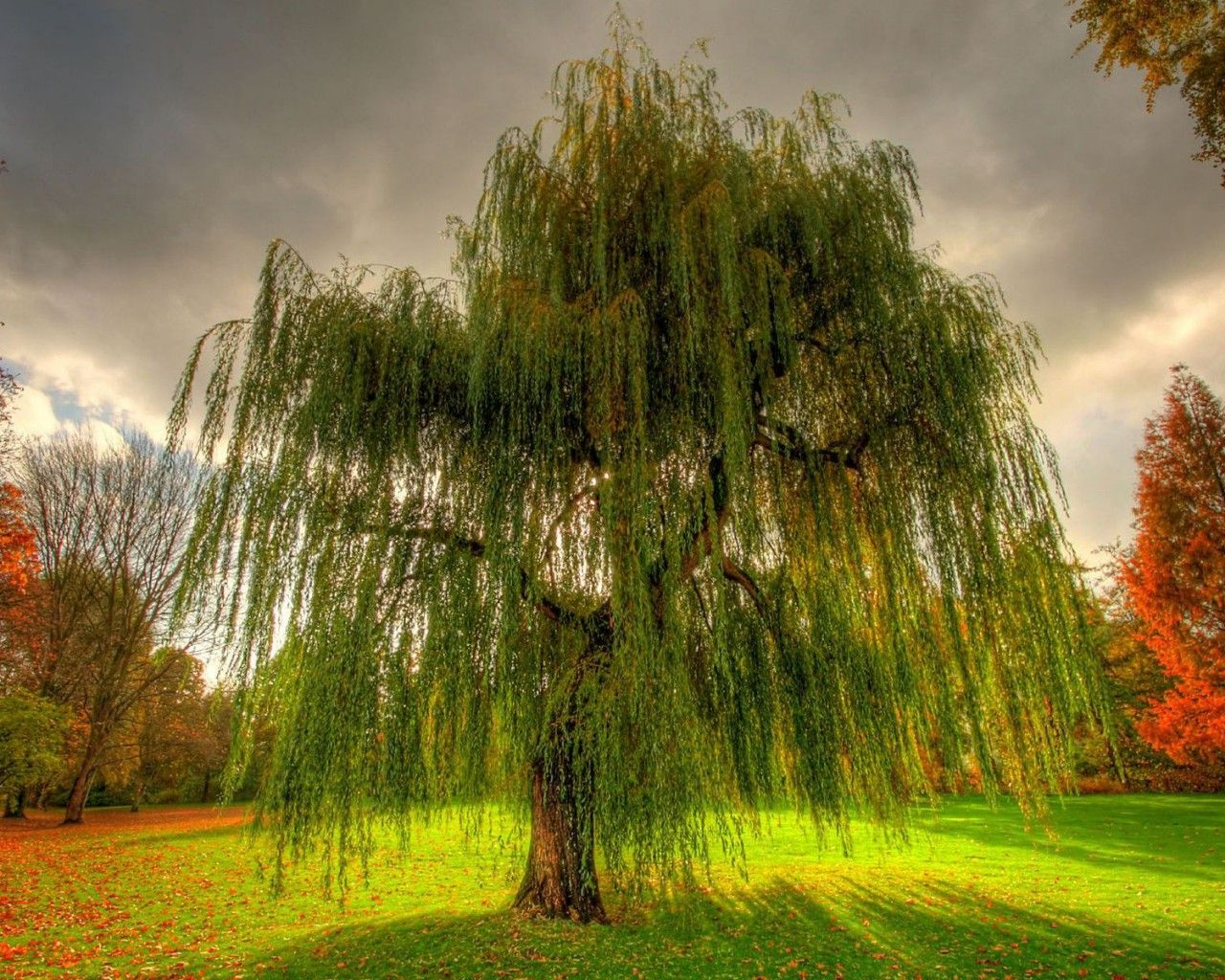 A beautiful weeping willow tree-- http://forums.psychcentral.com/coffeehouse/357540-trees-plants.html