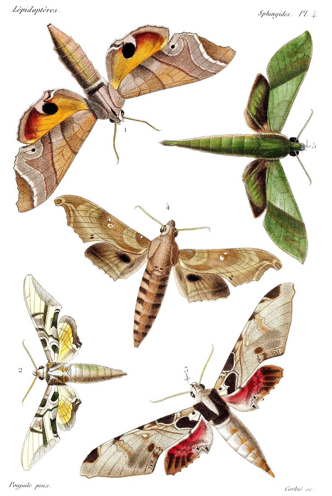 Petit Cabinet de Curiosites : Photo | histoire naturelle | Pinterest ...