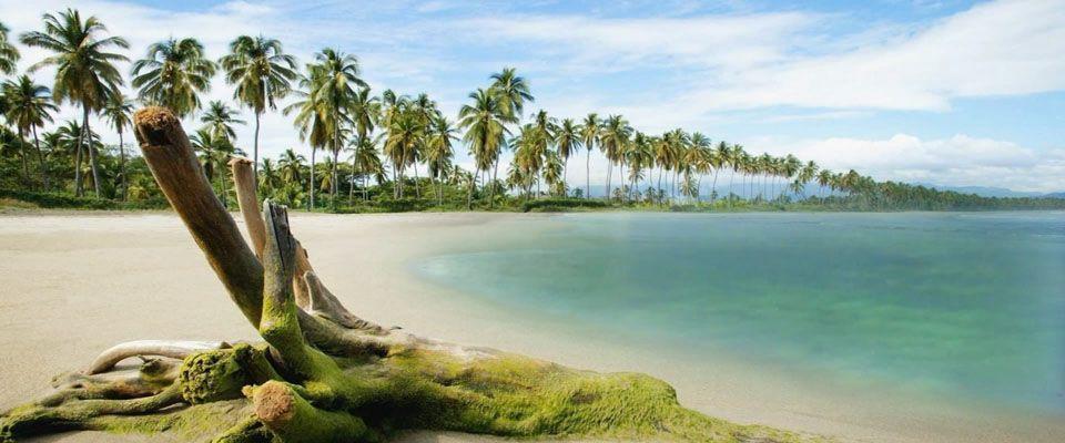 Ronin Beats Ocean Of Trees Japan Hd Nature Wallpapers Inspirational Wallpapers Desktop Photos