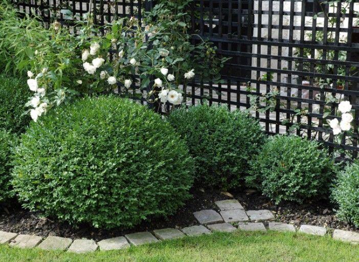 id e de massif planter en bordure de pelouse jardin pinterest bordures de pelouse. Black Bedroom Furniture Sets. Home Design Ideas