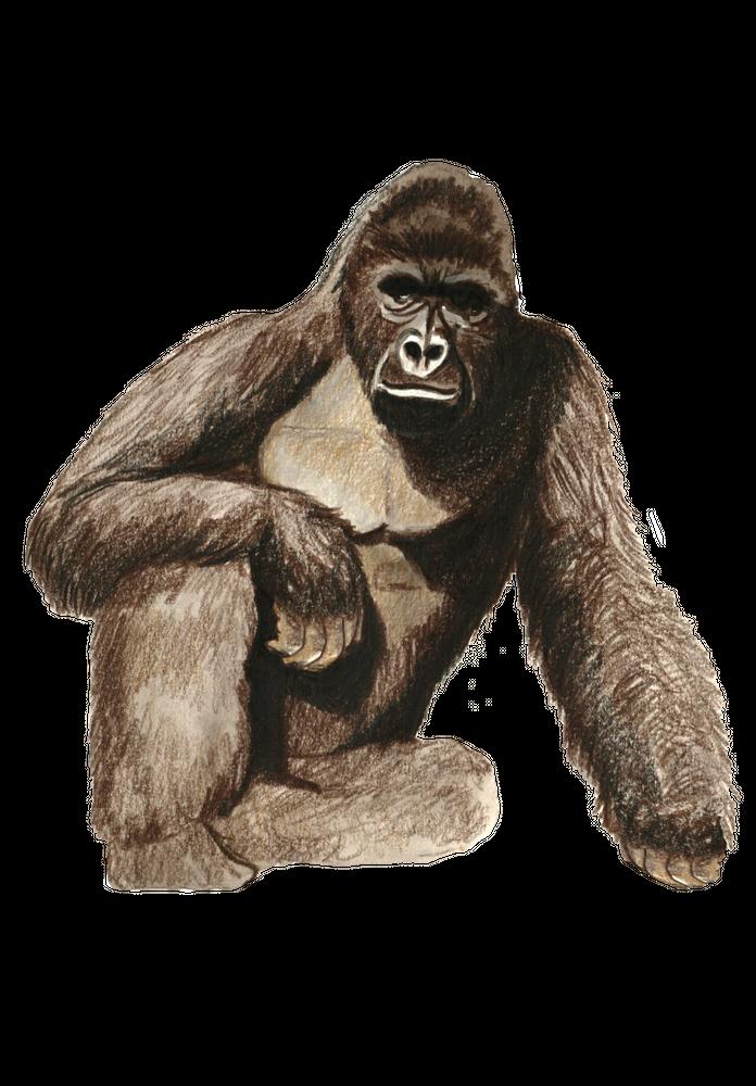 Harambe Gorilla Meme Illustration Zoo Art Print By Catbutt Co X Small Zoo Art Gorilla Illustration Harambe Gorilla Meme