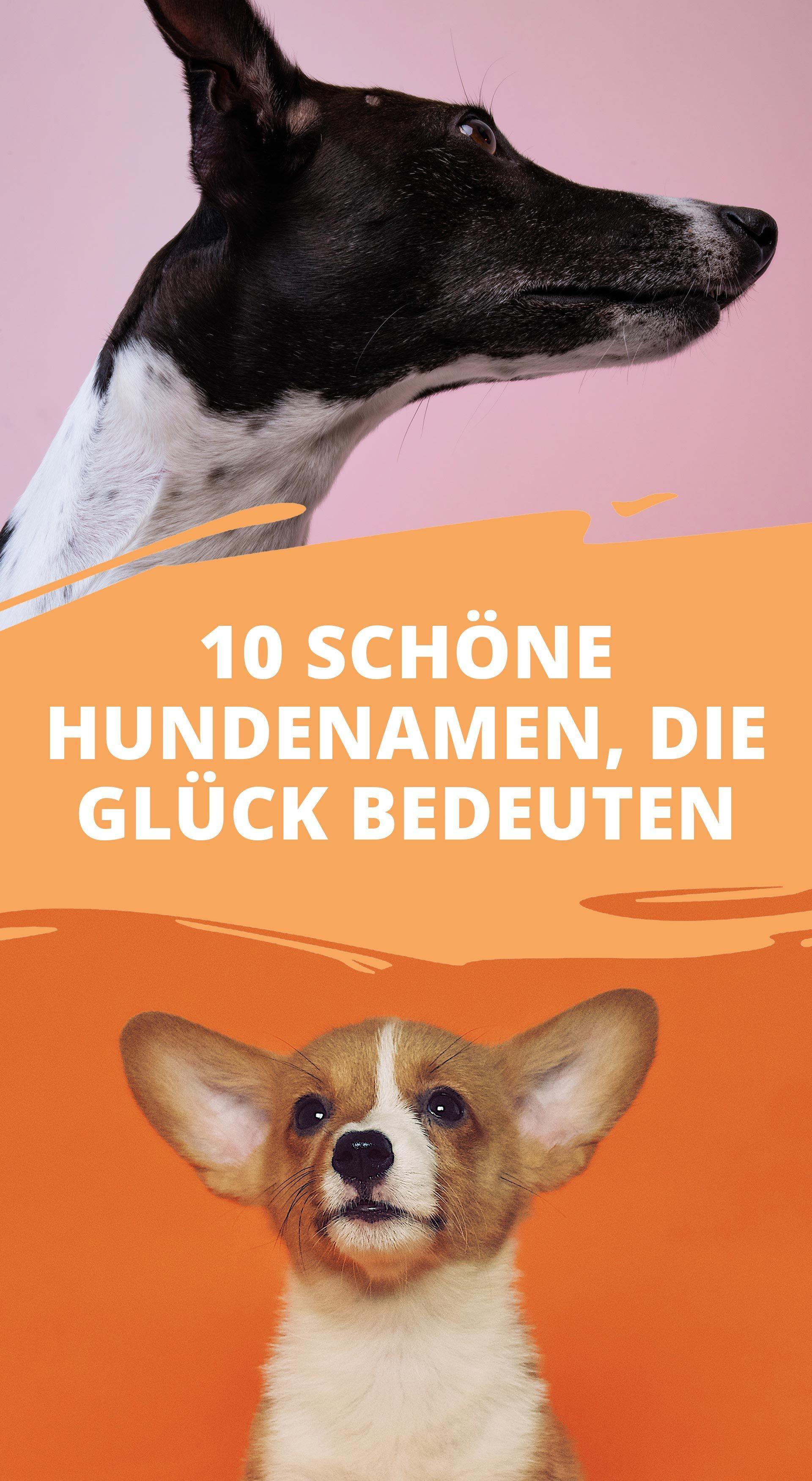 10 Schone Hundenamen Die Gluck Bedeuten Hunde Hundenamen Tier