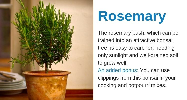 10 Beginner-Friendly Bonsai Plants #bonsaiplants