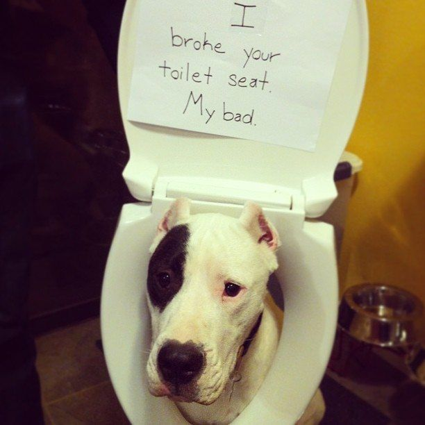 Top 50 Dog Shaming Photos On The Internet