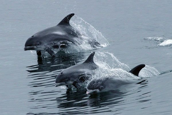 """Résultat de recherche d'images pour """"observation des dauphins en islande"""""""