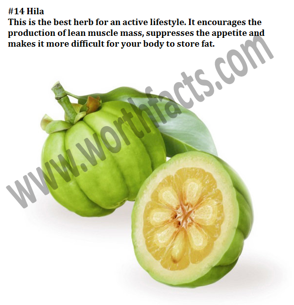Where can i buy pure garcinia cambogia photo 1