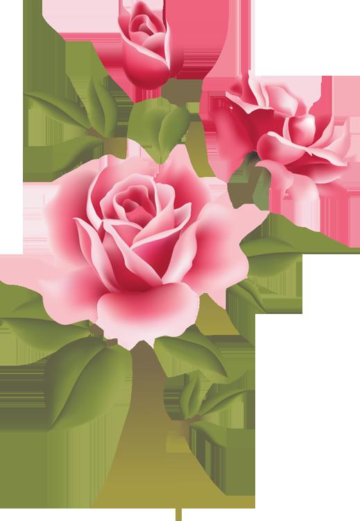 Web Design | Pink roses, Floral border and Clip art