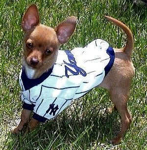 save off 23ecc 64722 MLB - New York Yankees Dog Jersey | ANIMALS & SUPPLIES | Ny ...