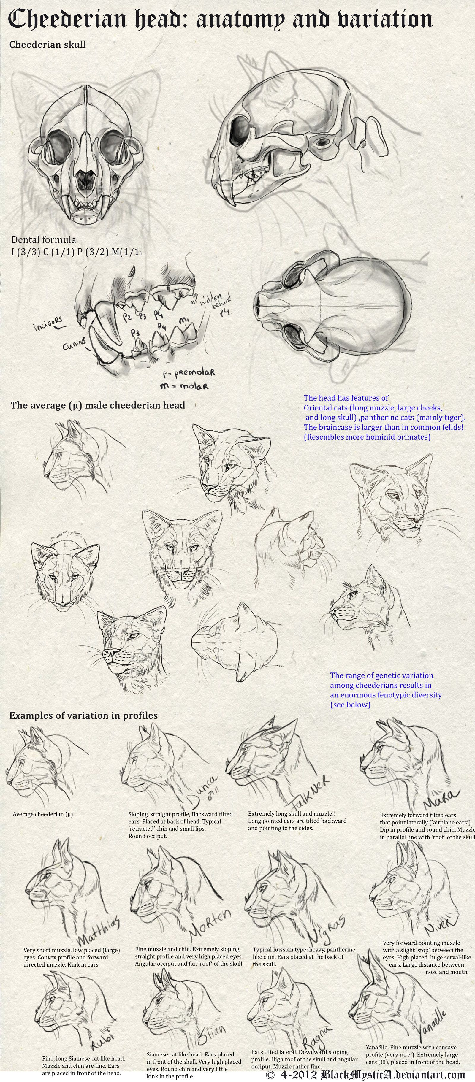 Cheederian head anatomy by BlackMysticA.deviantart.com on ...