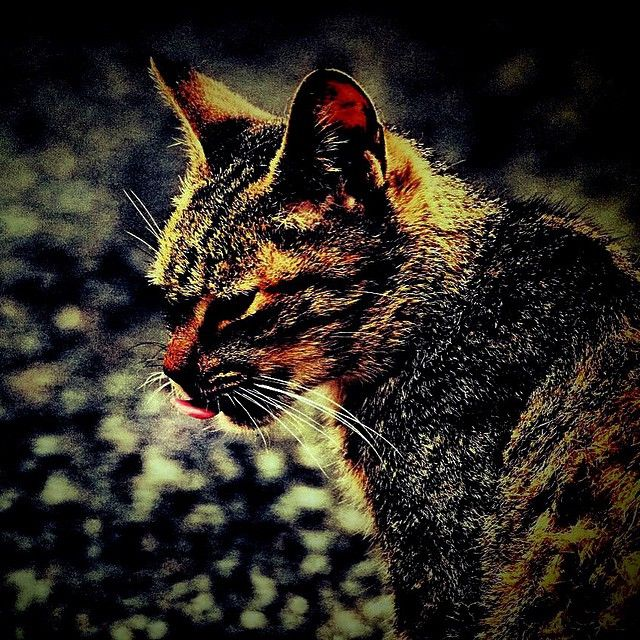"@shoji_ogawa_unlimited's photo: ""#cat"""