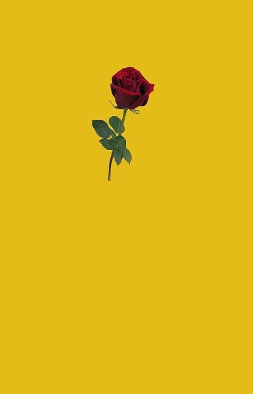 Soft grunge rose | iPhone Case & Cover | Soft grunge, Rose iphone case, Wallpaper