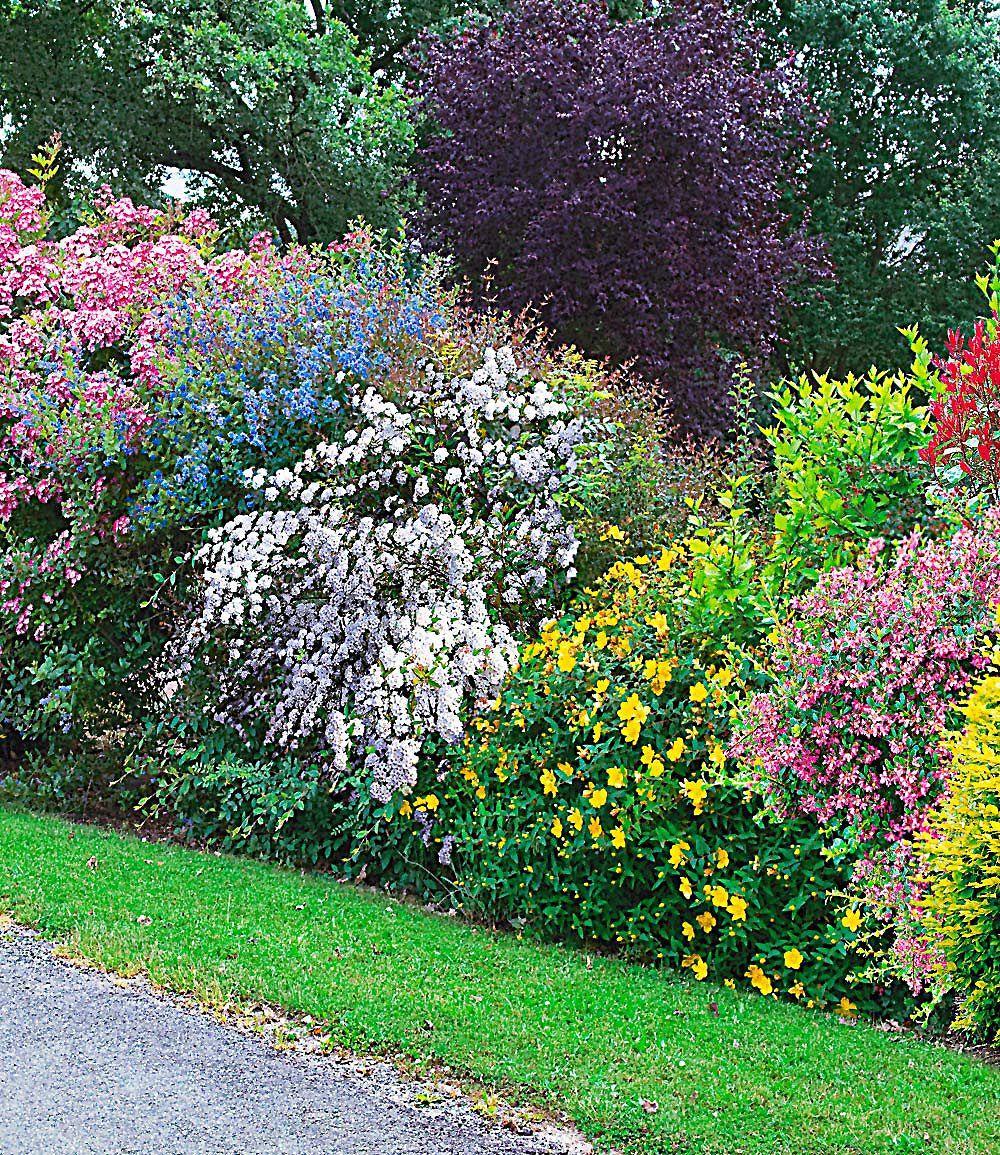 sommer hecken kollektion 5 pflanzen garden pinterest hecken pflanzen und sommer. Black Bedroom Furniture Sets. Home Design Ideas