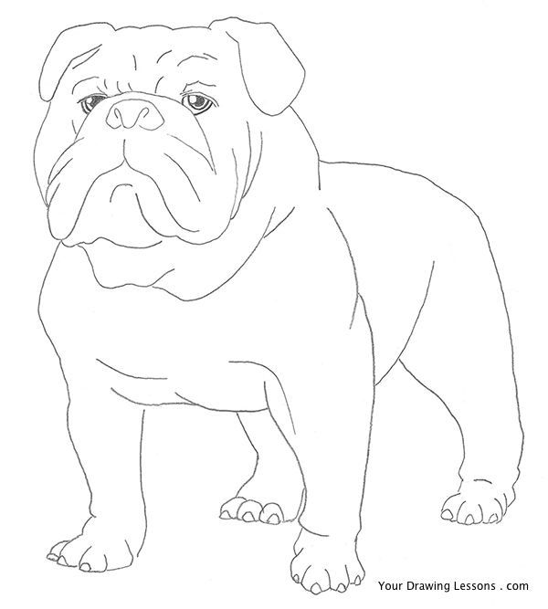 How To Draw A Bulldog | animales | Pinterest | Accesorios para ...
