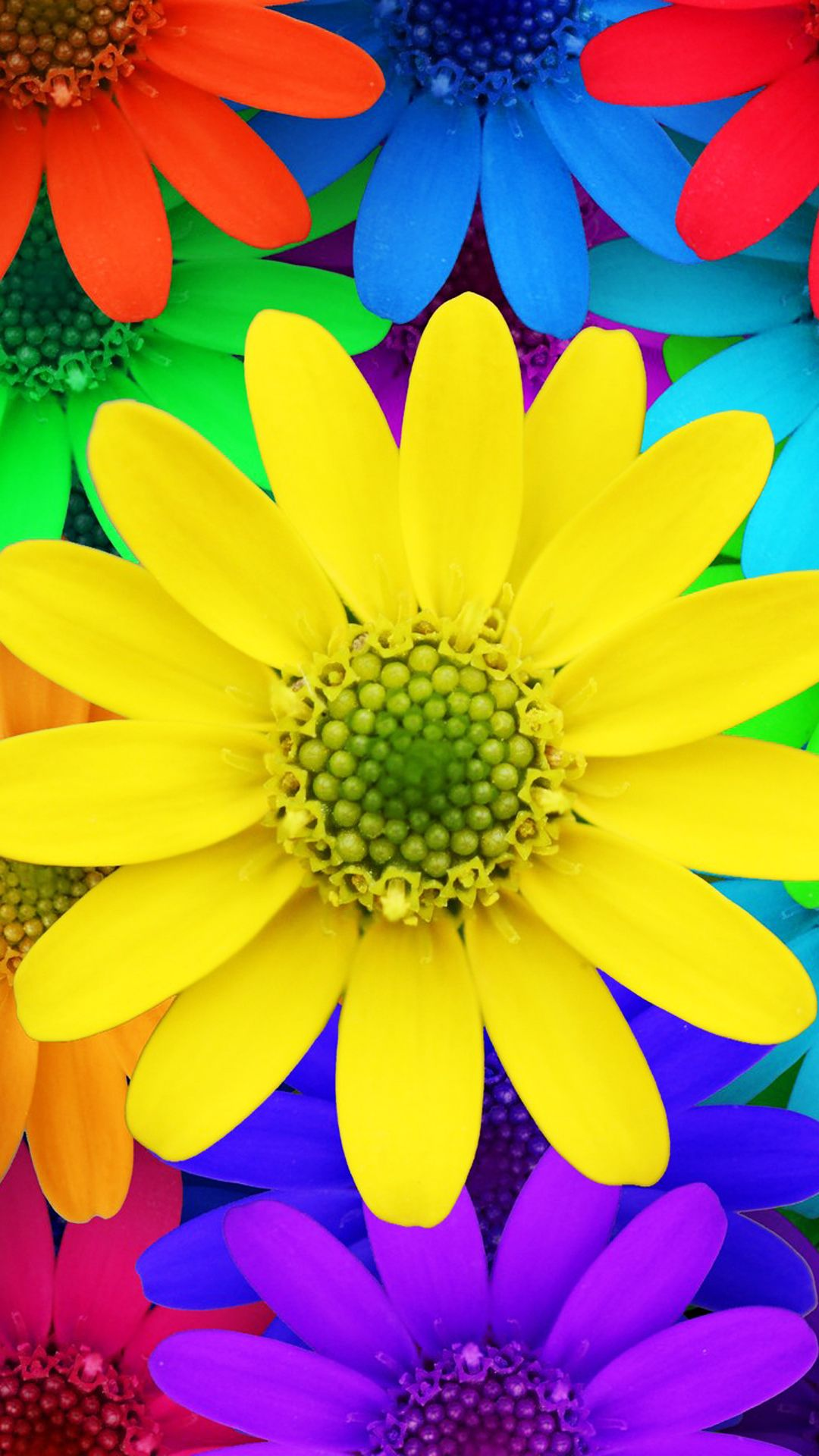 Colorful Daisy Flowers Spring Red Yellow Blue Purple 3563imageg