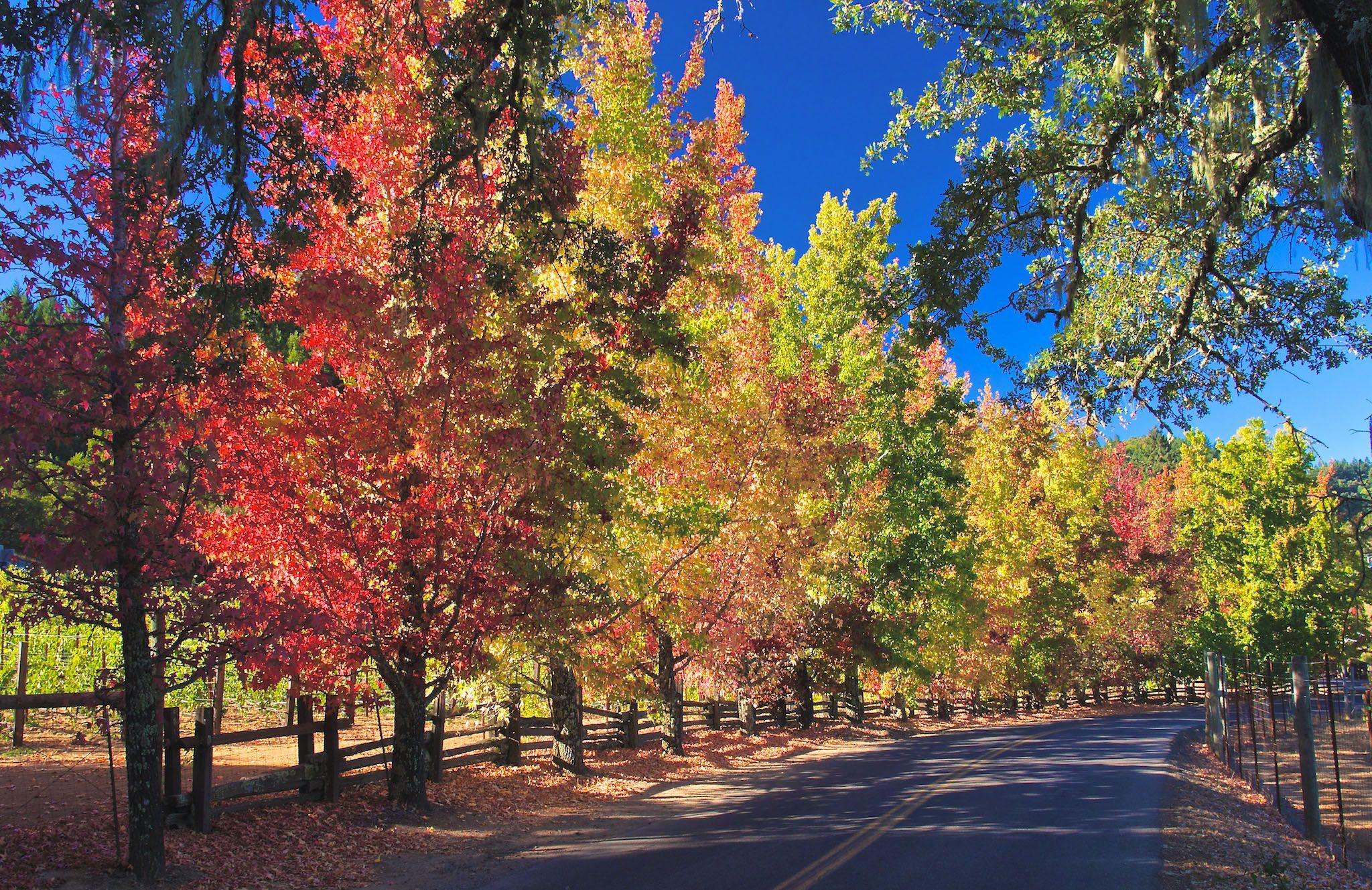 Sonoma County Fall Color The Digital Story Sonoma County Wrightwood California Sonoma
