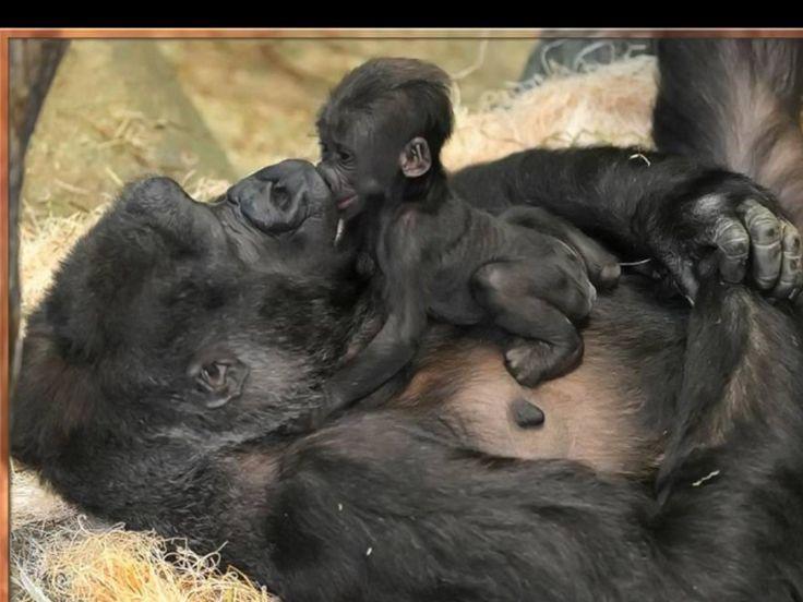 #animals# #Amazing##cut# #mother# http://itz-my.com