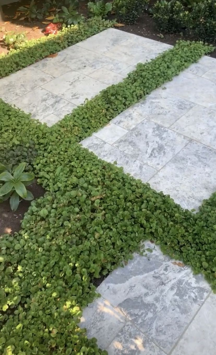 Pin by lvtan on Alfred Landscaping Outdoor, Landscape