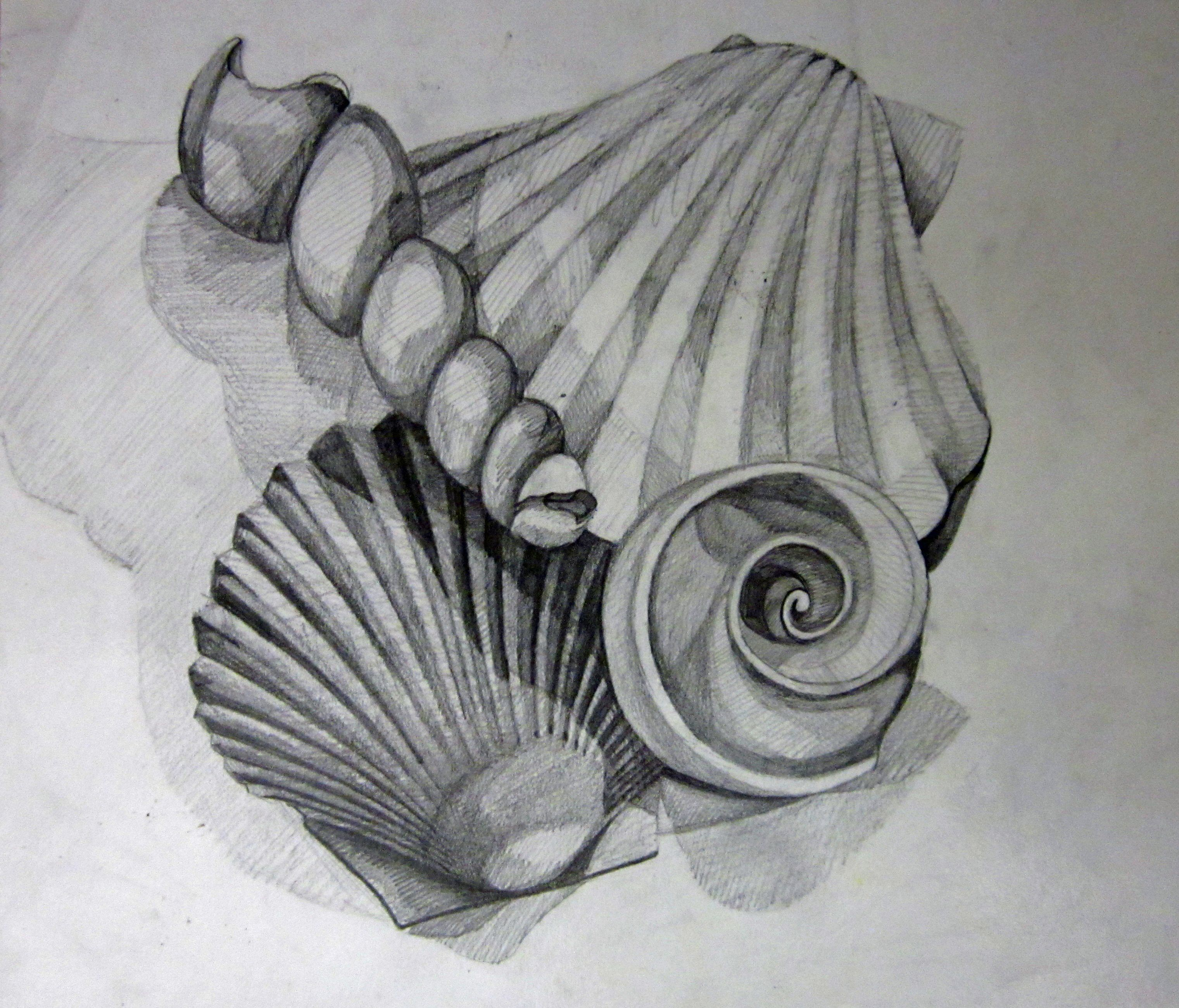 Uncategorized Shell Drawings my teacher example for value study shells still life 8th grade drawings