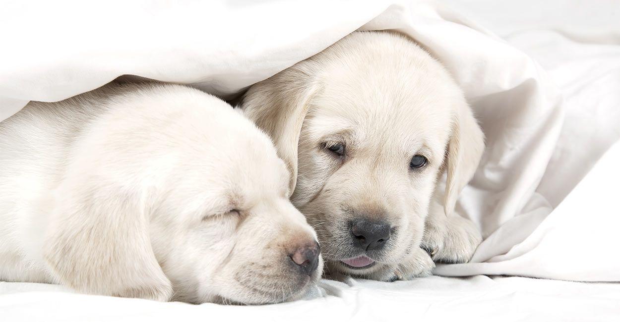 Best Dog Sleeping Bag Sleeping Dogs Dogs Best Dogs