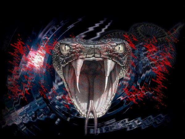 Snake Hd Wallpapers For Pc Animais Dojo Planos De Fundo