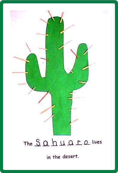 Desert Animals & Plants #desertlife