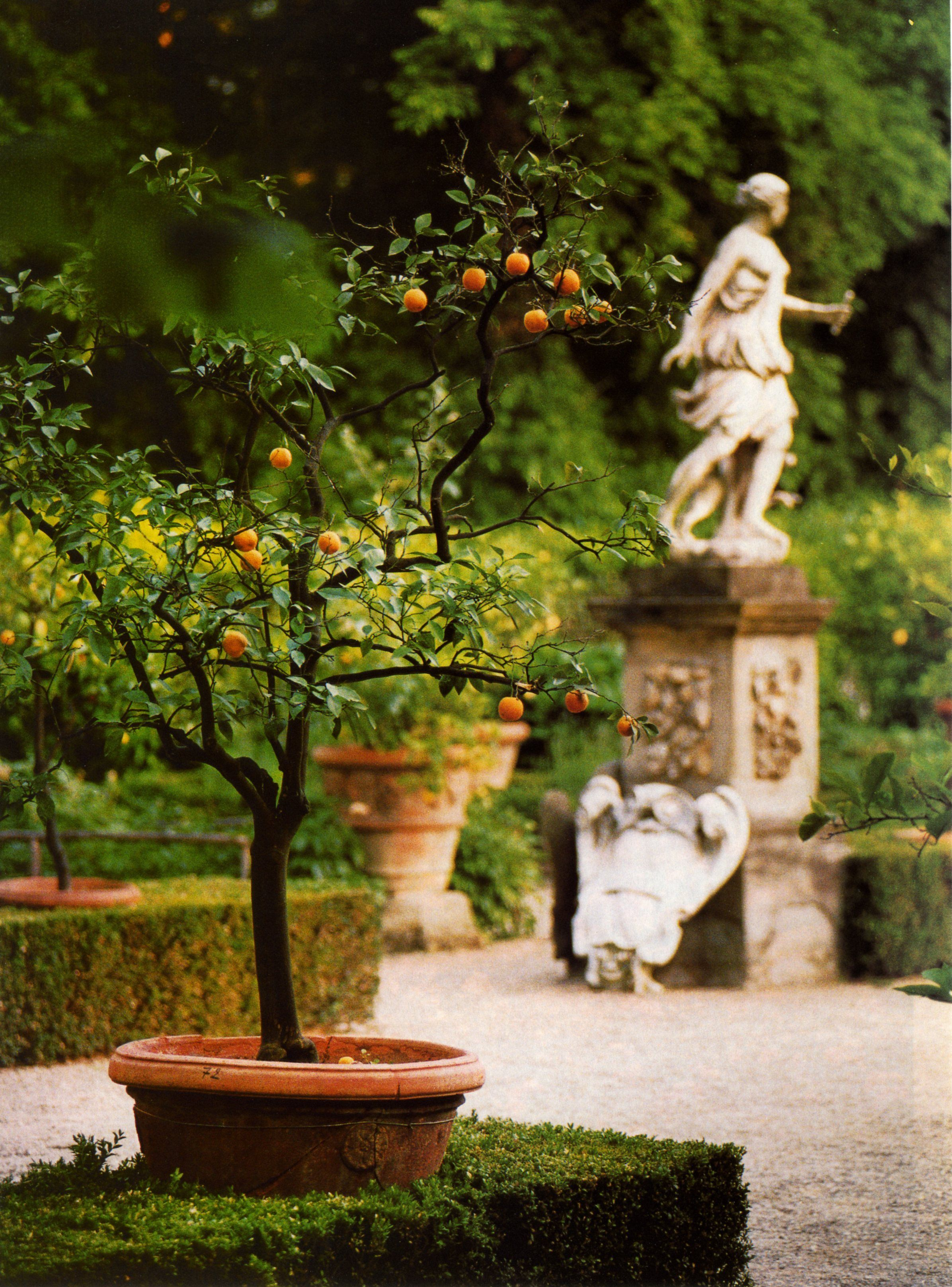 Renaissance garden of Palazzo Corsini, Florence (from an old ...