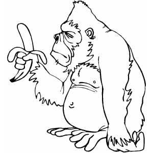 Gorilla With Banana Dolphin Coloring Pages Monkey Coloring Pages