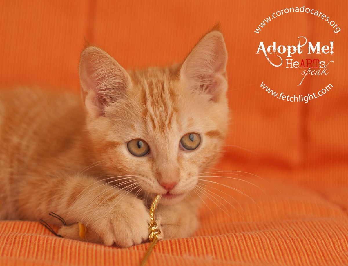 May is available to adopt from CoronadoCARES, http://www.coronadocares.org, and Coronado Veterinary Hospital, http://www.nadovet.com