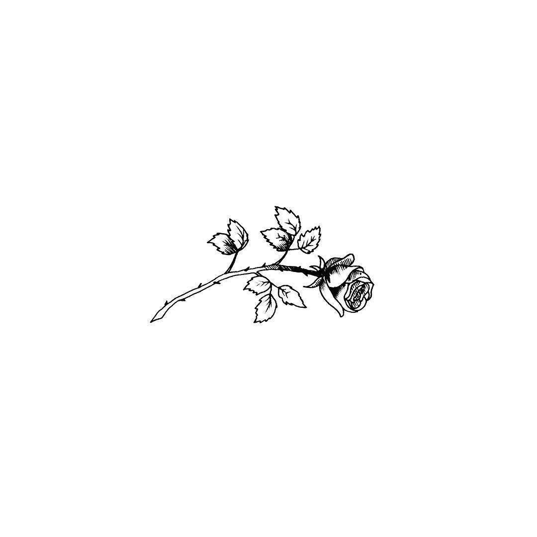 Tattoo Ideas Tattoos Small Tattoos White Rose Tattoos