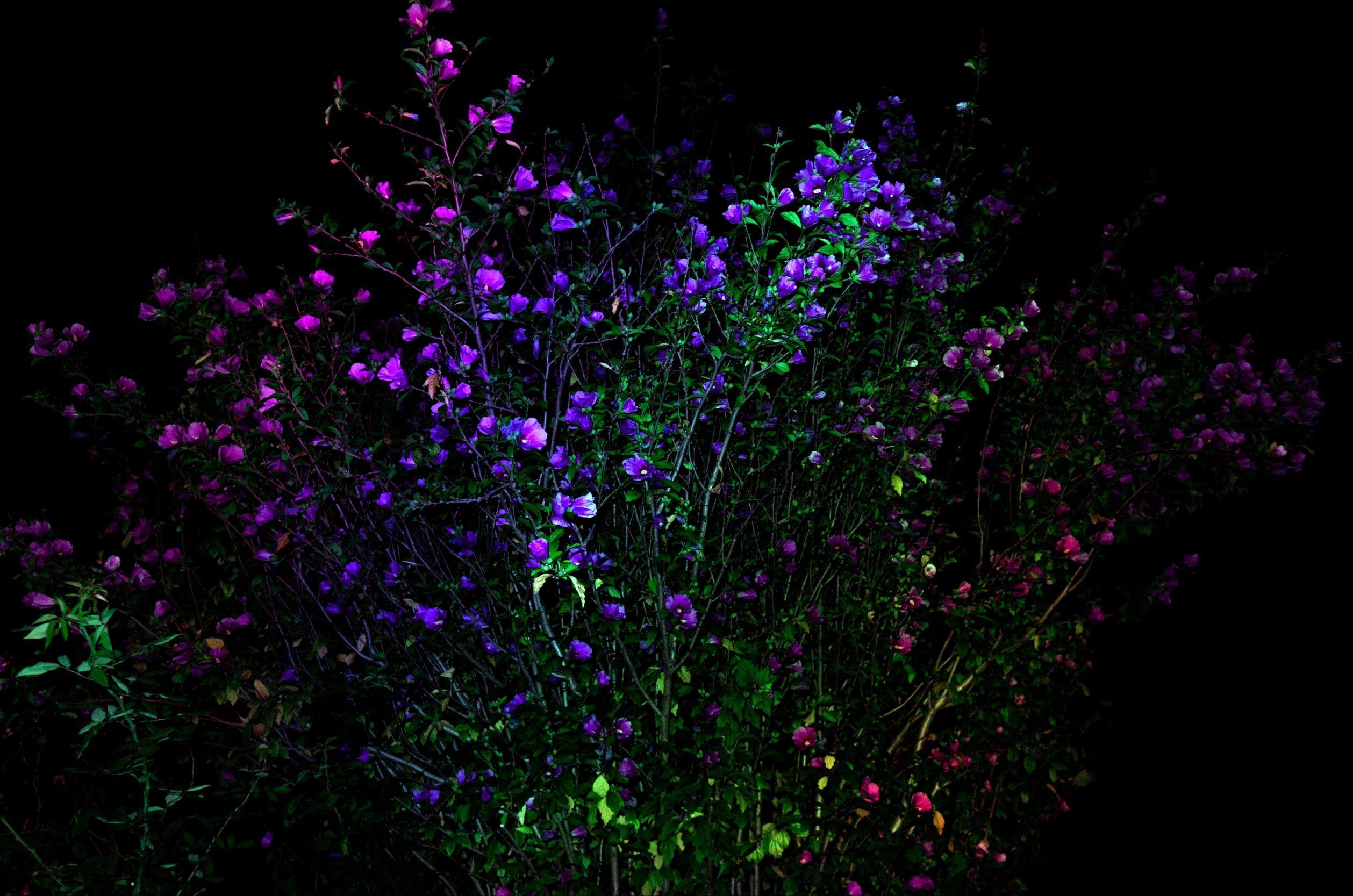 Night flower kukka pinterest flower beautiful flowers and night flower izmirmasajfo