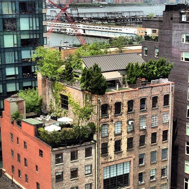 #roofgarden