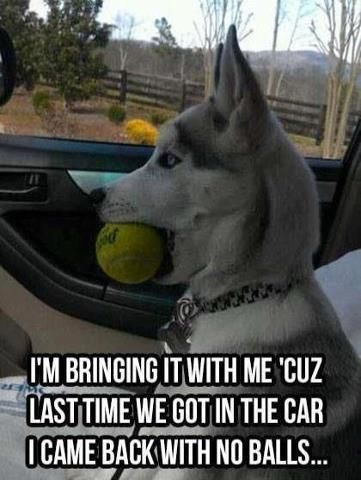 That S Call Neuter Funny Dogs Funny Animal Pictures Funny Animals