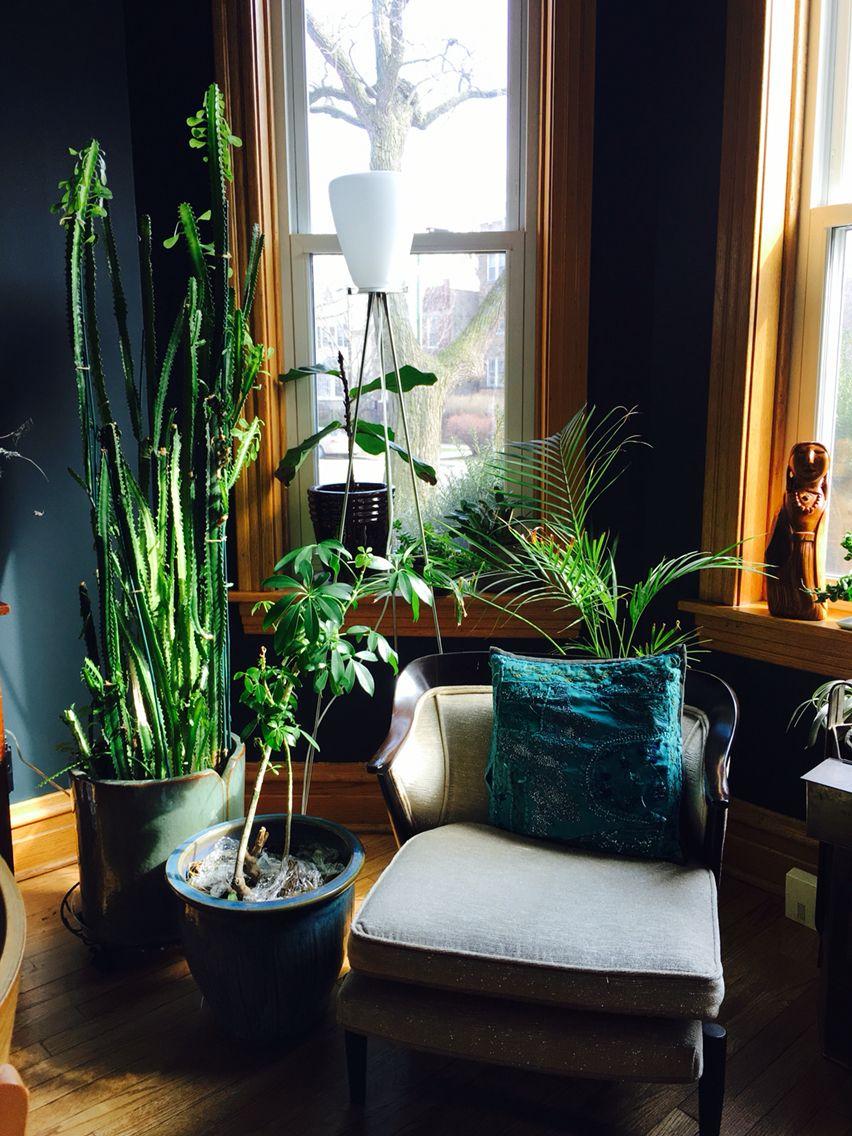 House plants, Chicago Graystone, indoor garden, sun  room, Farrow and Ball, Black Blue, urban jungle