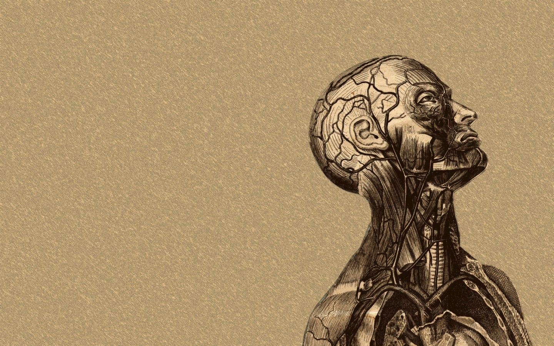 ANATOMY drawing WALLPAPER - Buscar con Google | DIBUJO ANATOMICO ...