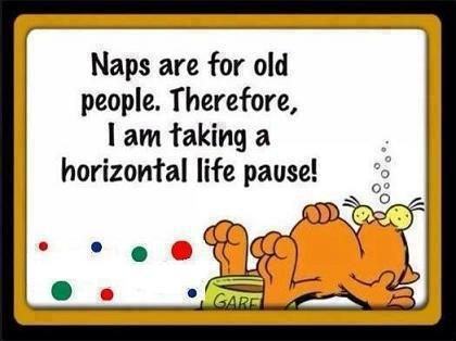 I naps! | My best humor pin - Community Board | Pinterest ...