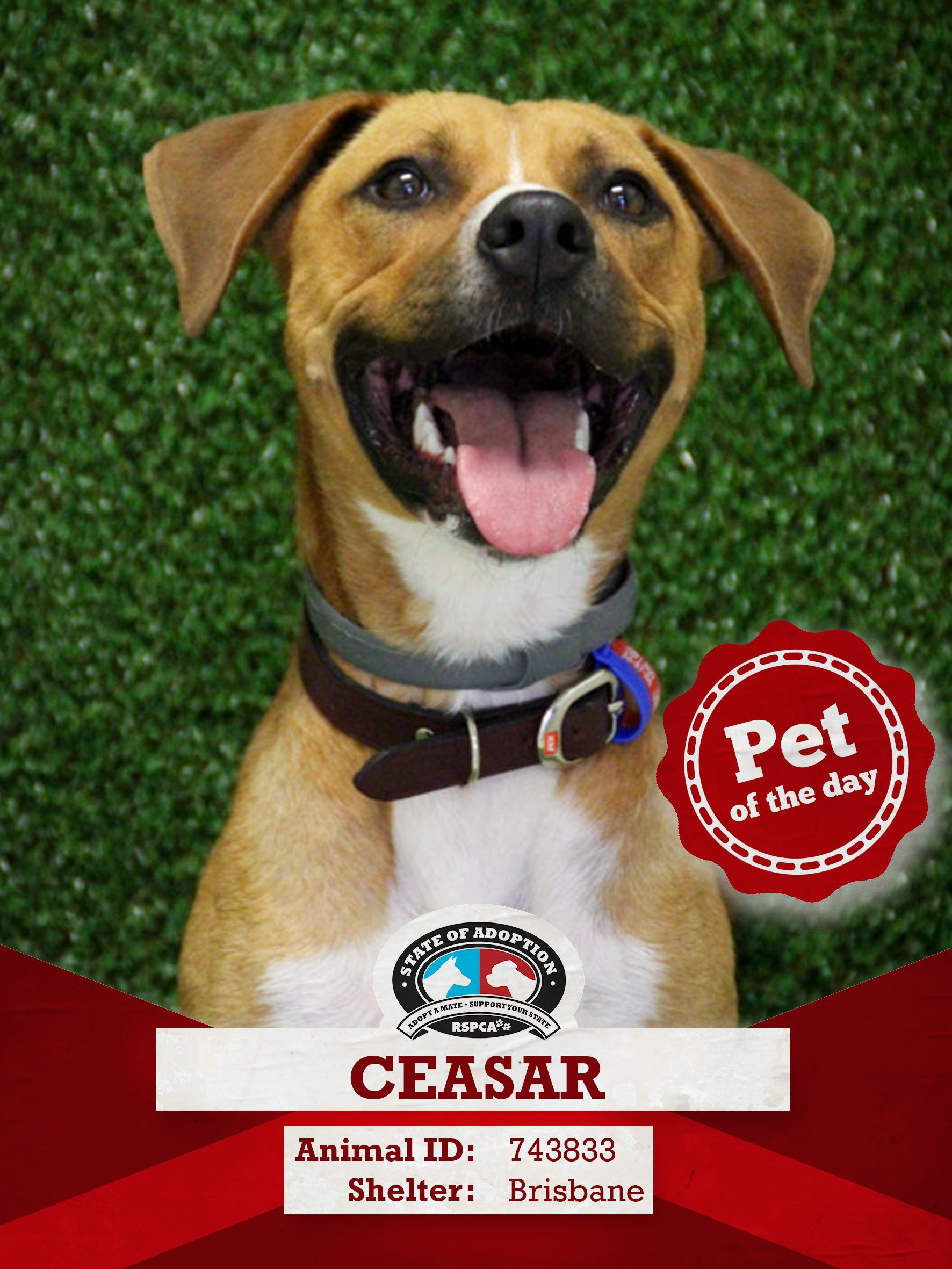 Can You Believe That This Adorable Pooch Ceasar Has Been In Rspca Care For 166 Days That S Too Long For A Handsome Man Like This If You Adopted Pinte
