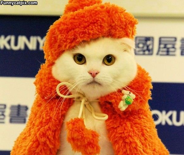 Funny dressed up cat seems to be ready for the party!