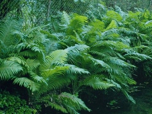 Best Credit Hort Printers Backyard Canopy Garden Canopy 400 x 300