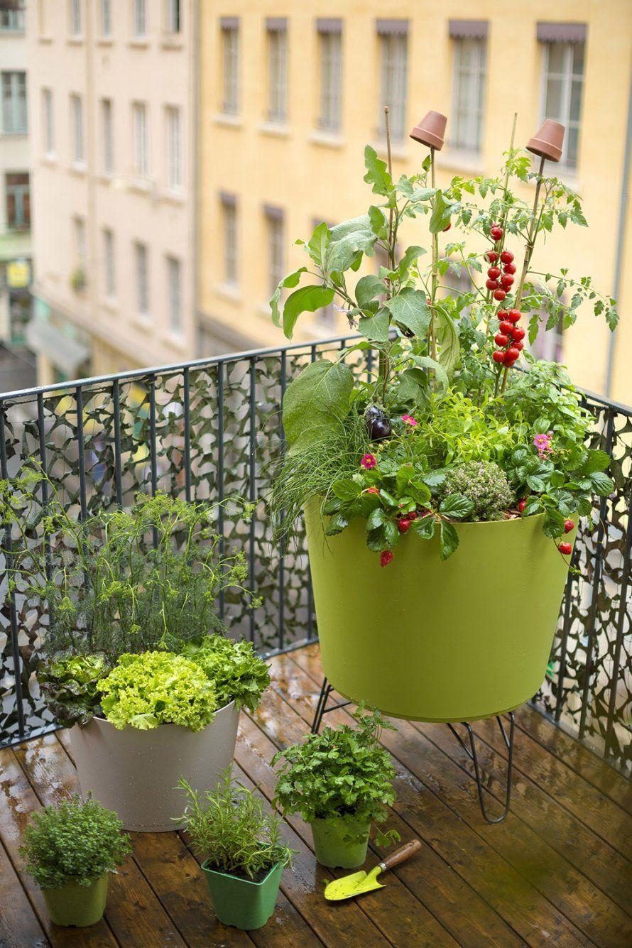Potager Pour Un Balcon Notre S Lection Horta Paisagismo E