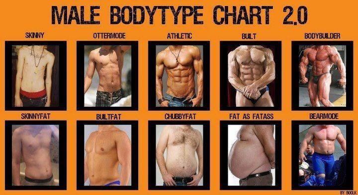 Male body type chart 2 0