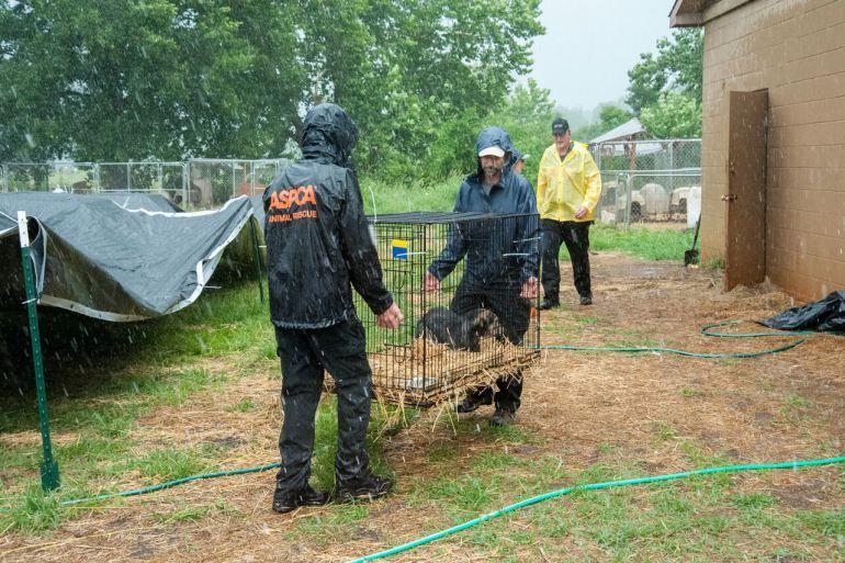 10+ Animal shelter brownsville tx ideas in 2021